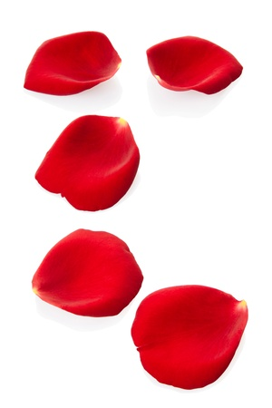 rose frame: Rose petals isolated