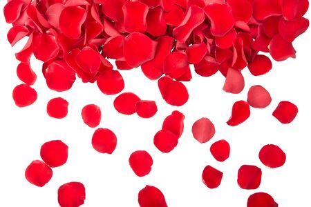 flower petal: Falling red rose petals Stock Photo