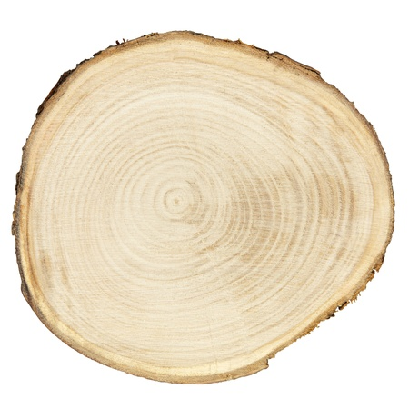 cross cut: Cross section of tree trunk isolated on white, clipping path included