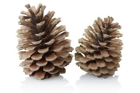 pine cone: Pigne isolati su sfondo bianco