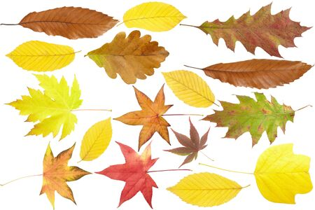 Autumn leaves collection isolated on white background photo