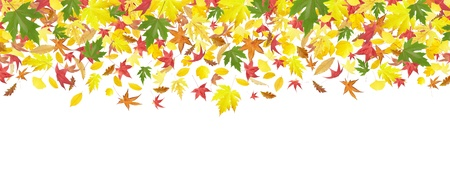 colorful maple trees: Falling autumn leaves frame isolated on white