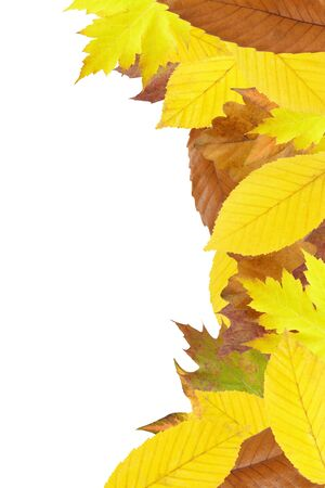 Autumn leaves border isolated on white photo