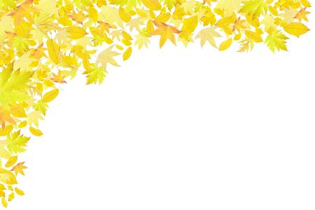 macro leaf: Falling yellow autumn leaves border isolated on white