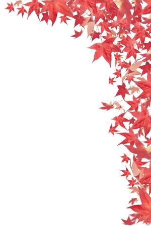Caduta foglie rosse in autunno bordo isolato su bianco Archivio Fotografico - 10406960