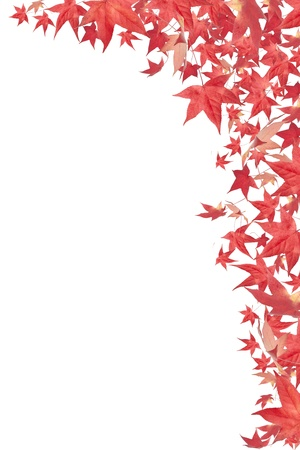 Falling red autumn leaves border isolated on white