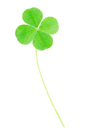 Green four leaf clover, clipping path included Stock Photo - 10506382