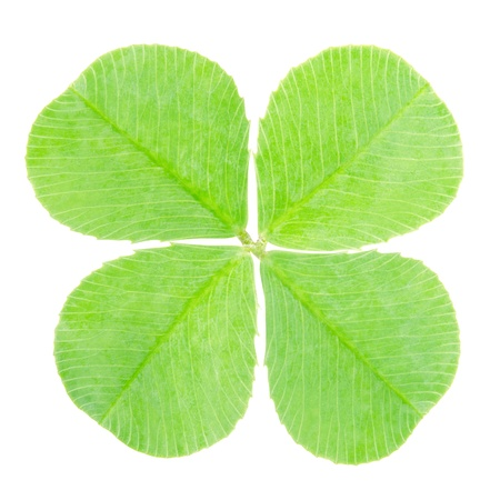 four leafed: Green four leaf clover, clipping path included