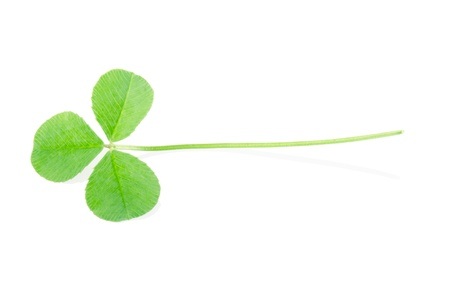 Green clover isolated on white, clipping path included photo