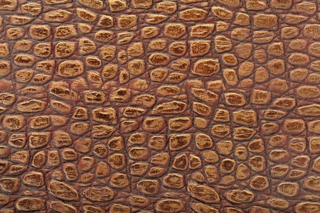 snakeskin: Reptile leather texture background Stock Photo