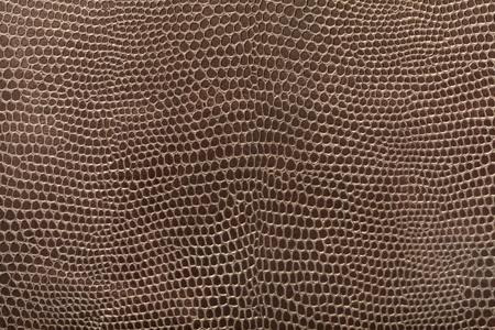 eidechse: Reptile Leder Textur Hintergrund