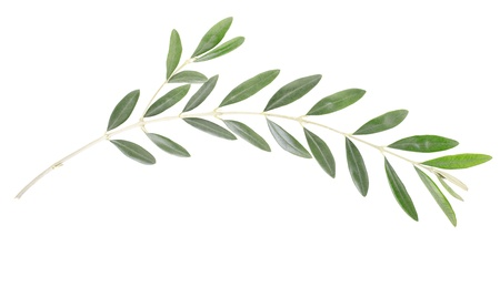 Olive branch and leaves on white photo