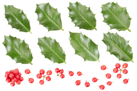 ilex aquifolium holly: Holly leaves and berries collection on white Stock Photo
