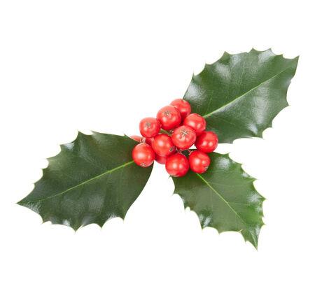 ilex aquifolium holly: Holly, Christmas decoration on white