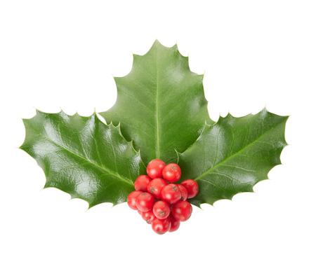 ilex aquifolium holly: Holly, Christmas decoration isolated