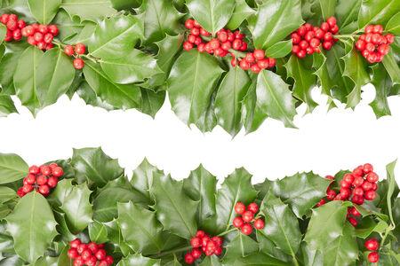 ilex aquifolium holly: Holly border, Christmas decoration on white Stock Photo