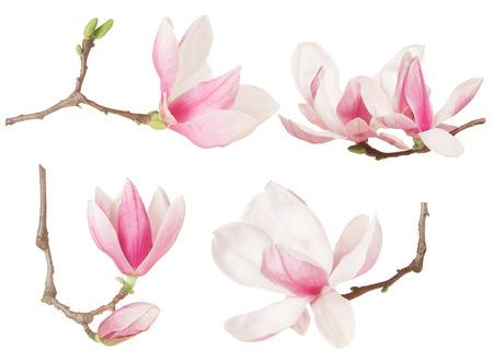 Magnolia colección primavera ramita de flores en blanco