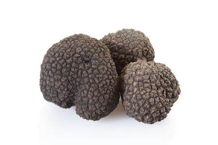 Black truffle group on white, clipping path included Stock Photo