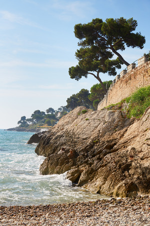 ocean and sea: Mediterranean coast and sea with maritime pine Stock Photo