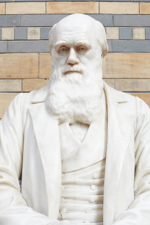 evolutionary: Charles Darwin white marble statue bust in Natural History Museum in London