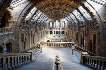 natural history museum: Natural History Museum interior, staircase with arcade view, nobody in London Editorial