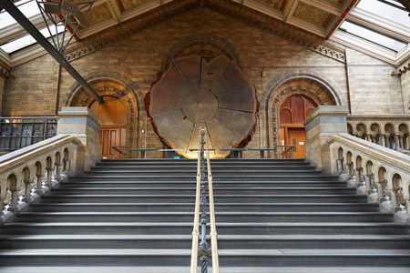 natural history museum: Natural History Museum interior with ancient stairway and giant sequoia section in London