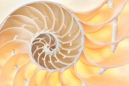 golden section: Nautilus shell section, perfect Fibonacci pattern background
