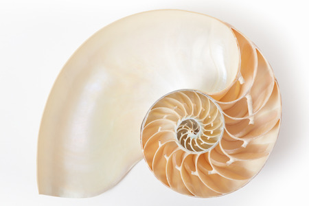 Nautilus shell section, perfect Fibonacci pattern on white with soft shadow, clipping path Stockfoto