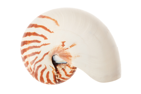nautilus shell: Nautilus shell isolated on white, clipping path included