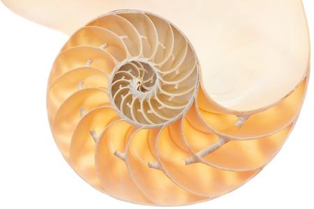 fibonacci: Nautilus shell section, perfect Fibonacci pattern isolated on white, clipping path included Stock Photo