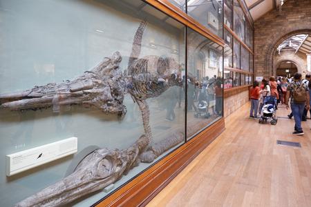 natural history museum: Natural History Museum interior with Ichthyosaur dinosaur fossil in London