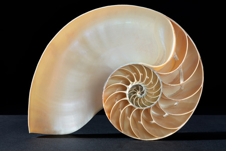 golden section: Nautilus shell, Fibonacci pattern on black, clipping path