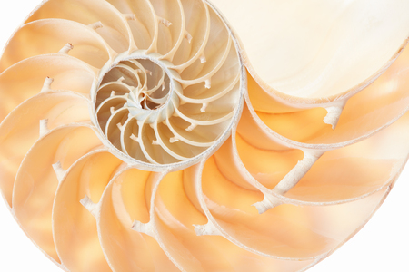 golden section: Nautilus shell section pattern background