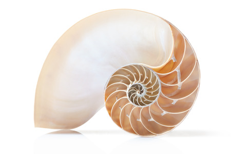golden section: Nautilus shell section on white, clipping path Stock Photo