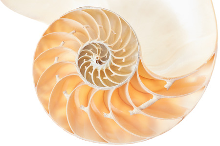 logarithmic: Nautilus shell golden section on white, clipping path Stock Photo