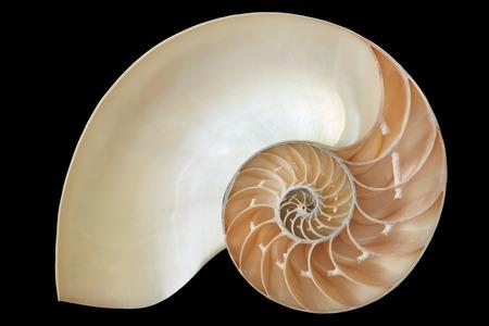 logarithmic: Nautilus shell, Fibonacci pattern on black, clipping path
