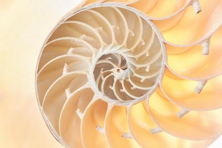 fibonacci: Nautilus shell section, perfect Fibonacci pattern background