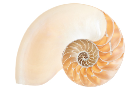 Sezione shell nautilus isolato su bianco, la saturazione percorso Archivio Fotografico - 58285642