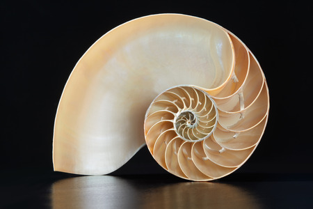 nautilus: Nautilus shell section on black Stock Photo