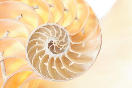 fibonacci: Nautilus shell section texture background Stock Photo