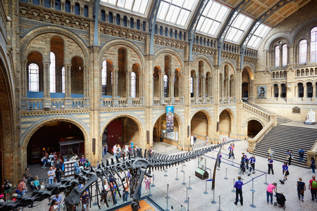 natural history museum: LONDON - AUGUST 7: Natural History Museum interior with people and tourists and dinosaur skeleton on August 7, 2015 in London, UK. The museum hosts a vast range of specimens from various segments of natural history.