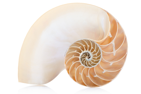 golden section: Nautilus shell section, perfect Fibonacci pattern on white, clipping path