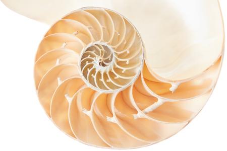 nautilus shell: Nautilus shell section on white