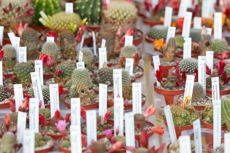 Succulente planten collectie in kleine potten met labels in een kwekerij Stockfoto