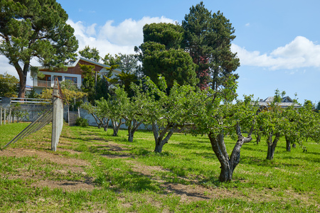 Orchard and villa in a sunny summer day, Italy