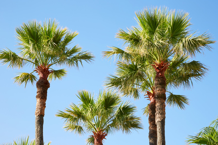 Palm trees and clear blue sky in a summer day, sunlight