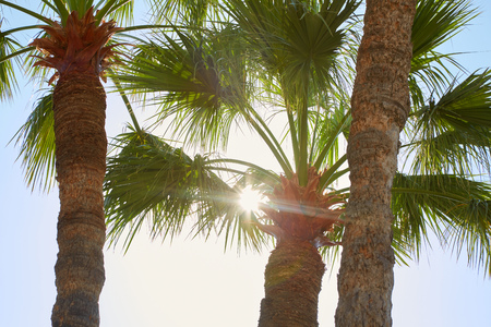 Palm trees and sun beams in a summer day Imagens