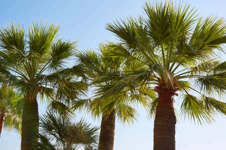 Palm trees and clear sky in a sunny summer day Imagens