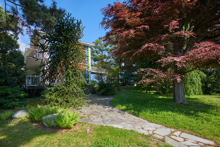 Garden with red beech tree, araucaria and villa in a sunny summer day, Italy