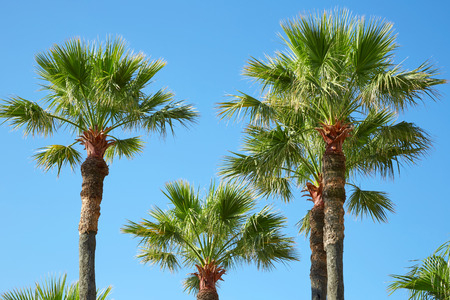 Palm trees and clear blue sky in a sunny summer day Imagens